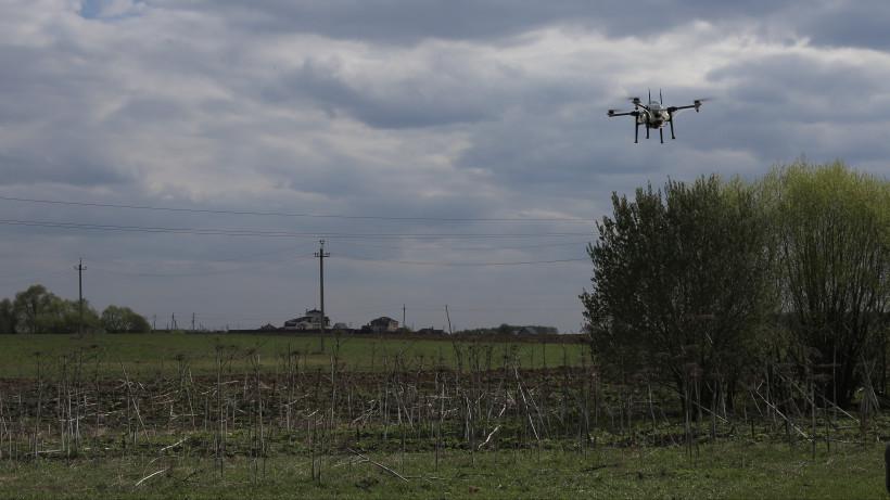 Впервые агродрон использовали для борьбы с борщевиком Сосновского в Подольске