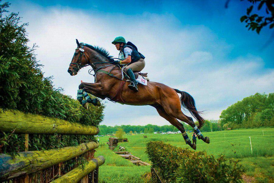 Химки примут чемпионат России по конному спорту