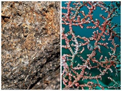 1. Слева находится каменная агама, которая обитает в Намибии. Эта ящерица меняет цвет и может слиться с любым фоном. А справа можно разглядеть карликового морского конька, который может скрыться в кораллах, подстраивая свой окрас под цвет морских беспозвоночных. Этот малыш обитает в водах Индонезии.