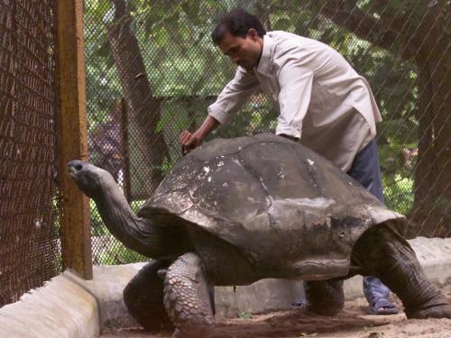 1. 187-летняя черепаха по имени Джонатан стала саой старой из известных в мире живых животных на земле.