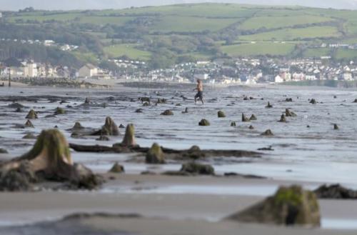 """Подводное королевство Уэльса Не так давно после сильного шторма у побережья Уэльса прямо из моря вырос таинственный лес. Древние топляки были скрыты морем более 4500 лет назад. И вот теперь жители побережья своими глазами наблюдают рождение легенды про """"затонувшую цивилизацию"""". Точнее, ее возвращение: местные жители ассоциируют лес с легендой XVII века об """"утонувшей сотне"""". Если верить ей, подводные деревья — не что иное, как остатки древнего леса Борта, который тянулся на несколько миль между Инис-Ласом и Бортом. По легенде, раньше здесь простирались плодородные земли, и жители собирали здесь большие урожаи, защищаясь от моря дамбой. По легенде, эта земля была затоплена после того, как жрица по имени Меририд, забыв о своих обязанностях, не уследила за колодцем фей и позволила его водам вырваться наружу."""