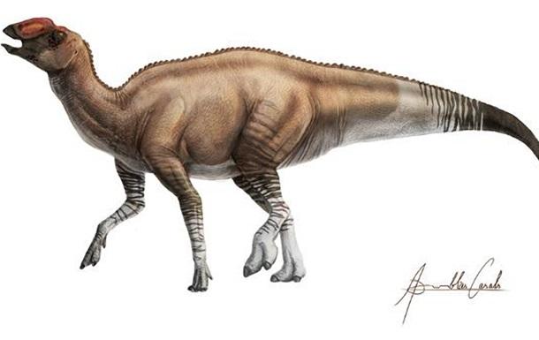 В США обнаружили новый вид динозавров