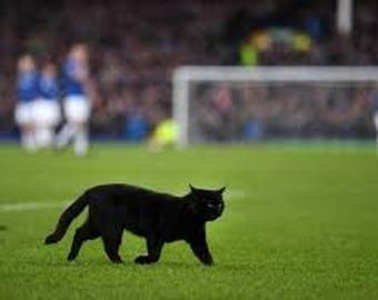 Черный кот прервал футбольный матч
