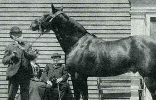 2. Лошадь по кличке Джим А вы знали, что за открытие вакцины от дифтерии люди обязаны лошади? Жеребец по кличке Джим был намеренно заражён палочкой дифтерии, однако в отличии от других животных, которым повезло меньше, он остался жив. Медики выяснили, что организм Джима начал вырабатывать антитела, которые боролись с болезнью. Этот эксперимент дал возможность получить заветную сыворотку для лечения людей. Таким образом, Джим вошёл в историю как медицинское чудо, спасшее жизни миллионов людей и животных на всей Земле.