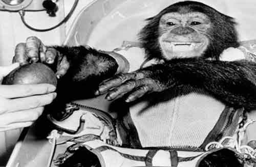 4. Шимпанзе-астронавт Хэм Шимпанзе по кличке Хэм был назван так в честь авиационно-космического медицинского центра Холломан и стал большой знаменитостью по всей Америке. Он даже попал на обложку журнала «Life» после того, как 31 января 1961 года был помещён в космический корабль «Меркурий-Редстоун-2» и запущен в космос с космодрома на мысе Канаверал.