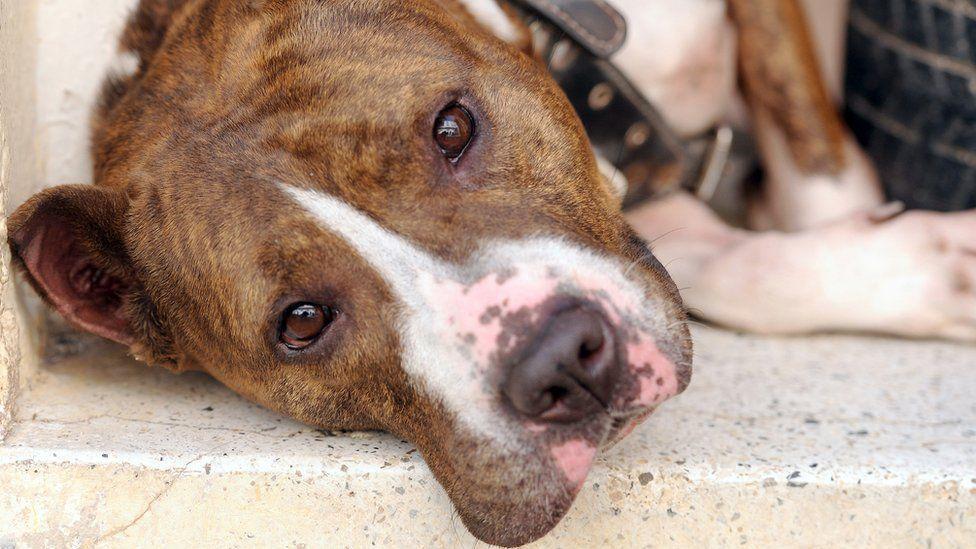 Топ-20 самых опасных пород собак