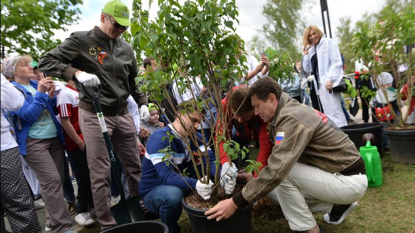Акция «Лес Победы - 2019» прошла в муниципалитетах Подмосковья