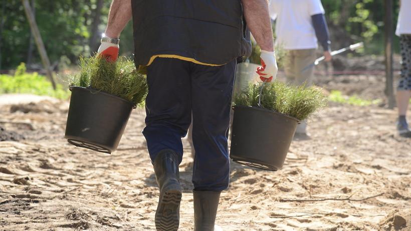 Более 19 тыс. деревьев и кустарников высадят в Подольске в ходе акции «Лес Победы»