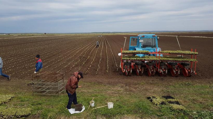 Яровой сев зерновых и зернобобовых культур провели на сельхозпредприятиях Зарайска на 70%