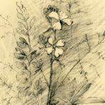 Мастер-класс «Рисование цветов углем с натуры»