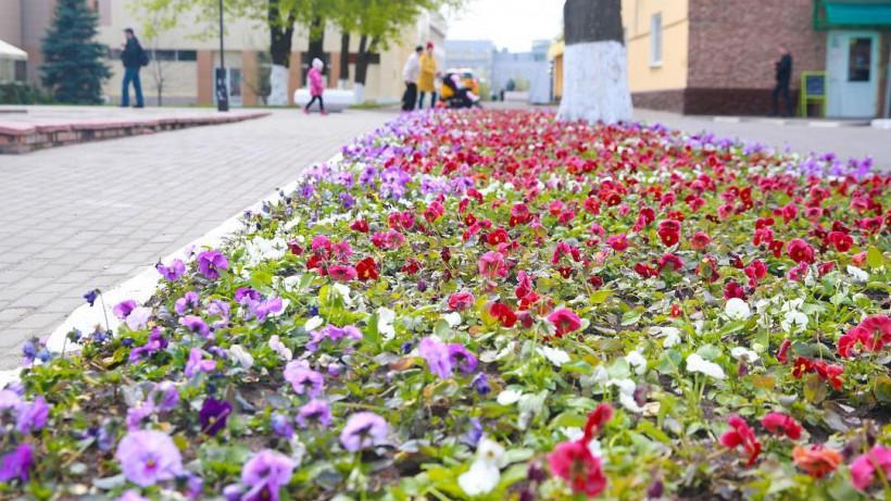Почти 34 тыс. цветов высадят в Люберцах ко Дню Победы