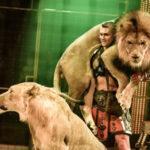 Шоу «Королевский цирк» будет представлено в День защиты детей в Иркутске