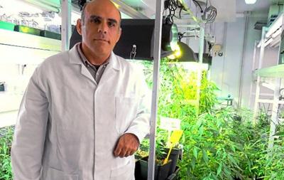 """В Испании ученые создали первую """"легальную"""" марихуану"""