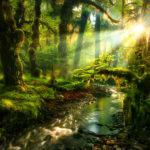 Встреча «Кто в лесу живет, что в лесу растет»