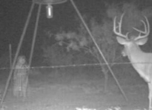 На кого смотрит олень? Или, скорее, кто смотрит на оленя?