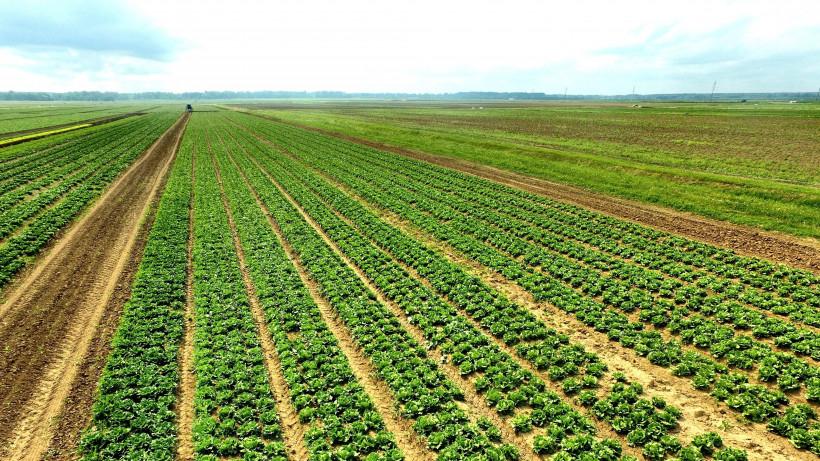 Более 5 тыс. тонн различных видов зелени вырастят в открытом грунте в этом году в Подмосковье