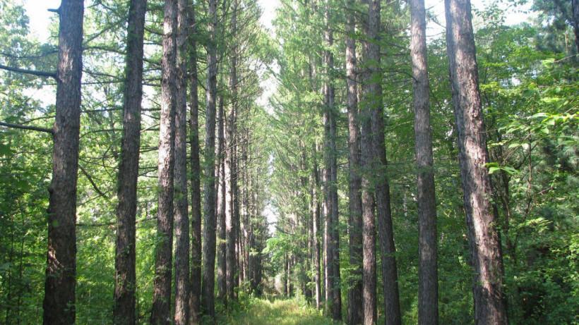 Более 60 тыс. растений высадили в Ивантеевском лесопитомнике за два года
