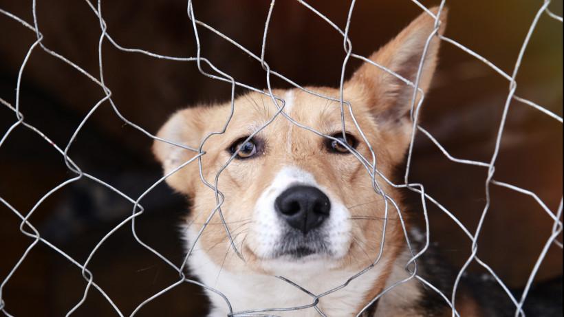 Десять машин ветеринарной неотложки готовы выехать по вызову в Московской области