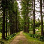 Экскурсия «Ботанический сад — Макарьевская пустынь»
