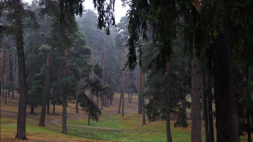Минэкологии Подмосковья поддержало законопроект о расширении понятия зеленых лесопарковых поясов