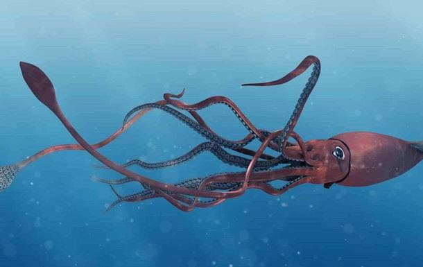 В Мексиканском заливе обнаружили гигантского кальмара