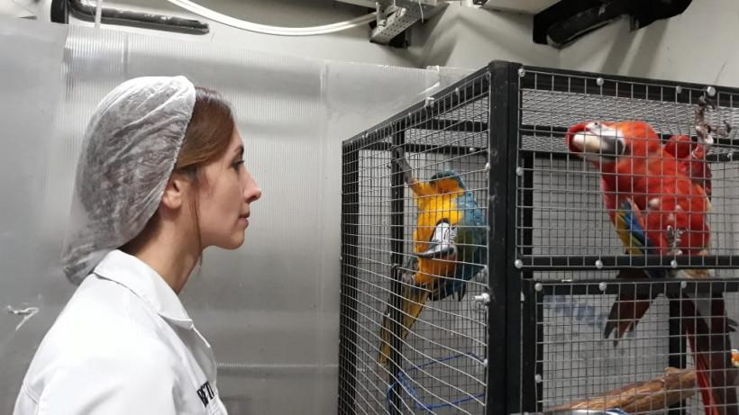 Ветеринарные участки в Московской области будут работать по единым стандартам