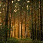 Викторина «Сказки старого леса»