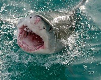 Во Флориде женщина чудом спаслась от акулы