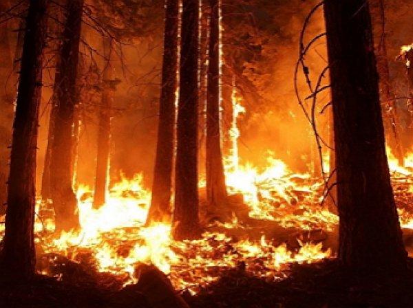 «Бороться бессмысленно и даже вредно»: площадь лесных пожаров в РФ достигла размеров Крыма