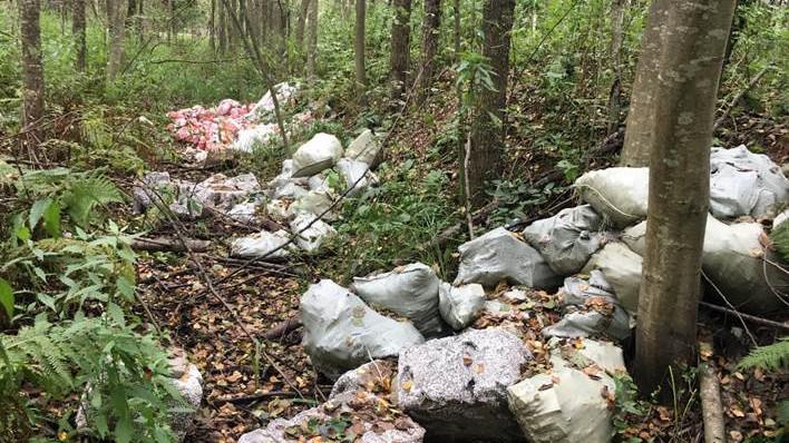 Навалы мусора в лесу
