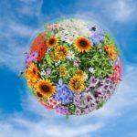 Игровая программа «Планета цветов»