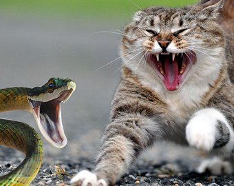 Кошка спасла семью от ядовитой змеи