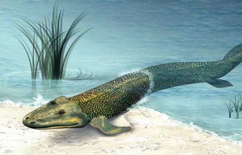 Тикталик Тикталик — странная помесь рыбы и крокодила. Представьте себе, что эволюция в ту пору еще не решила, как оставить лучше, и подарила современной рептилии плавники и рыбье тело. Сегодня археологи считают тикталика эволюционным связующим звеном между плавающими рыбами и их потомками.