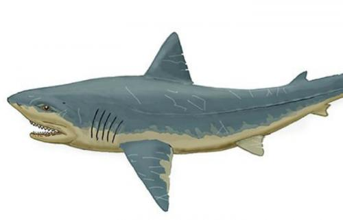 Скваликоракс Внешне скваликоракс очень напоминает современную нам большую белую акулу. Останки этого океанического монстра находили в Северной Америке, Европе и Африки. Скваликоракс питался даже огромными динозаврами — с таким набором зубов, каждый из которых вырастал до 5-7 сантиметров, проблем с охотой у него не было.