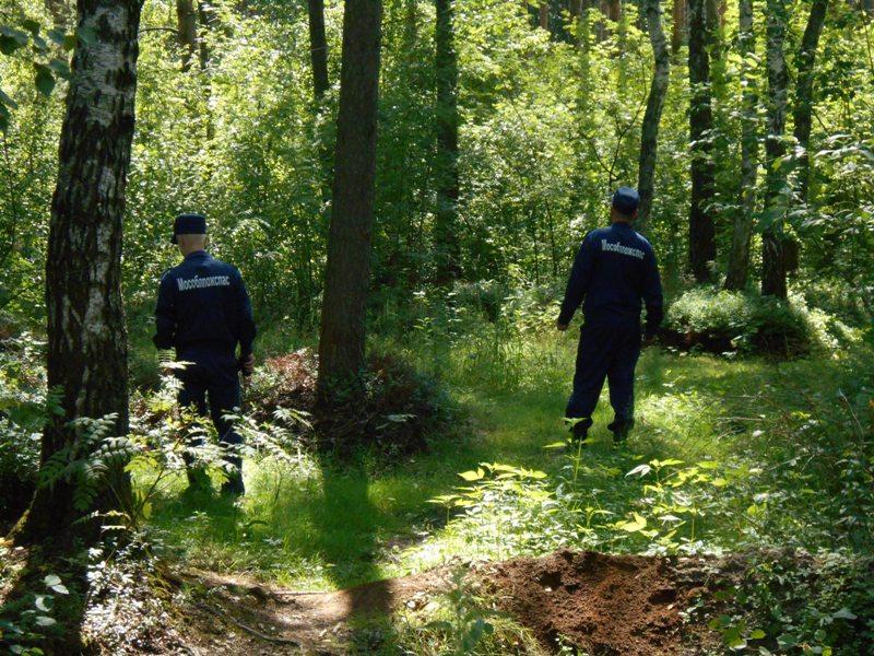 Около 100 человек потерялись в подмосковных лесах за три дня