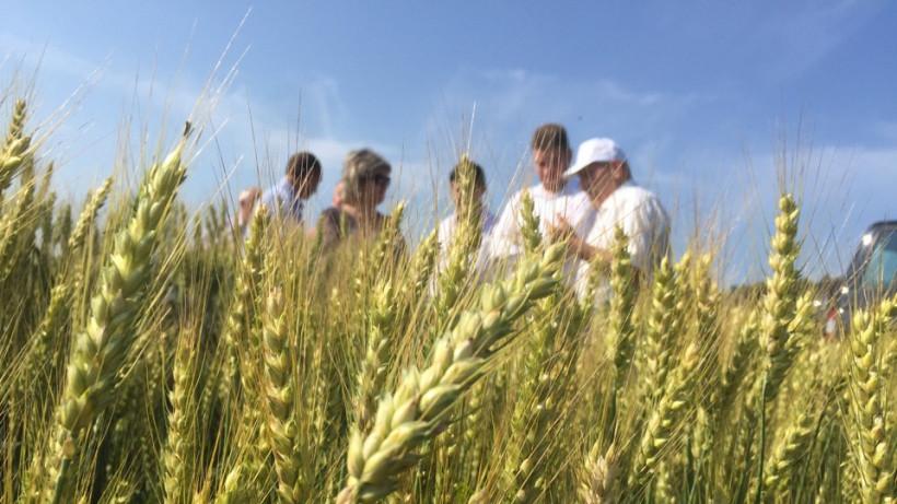 Подмосковные селекционеры представят новые сельхозкультуры 4 июля