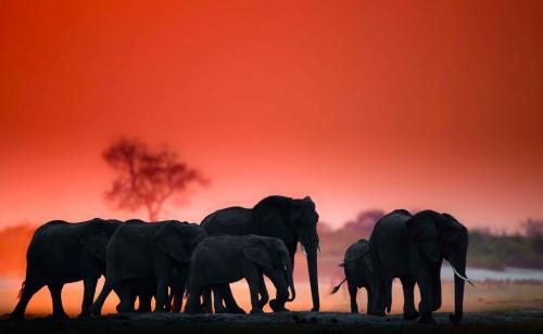 Стадо слонов. (Фото Wim van den Heever):