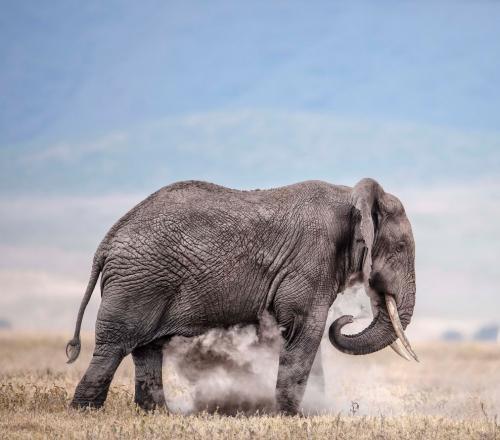 Слон купается в пыли. (Фото Wim van den Heever):