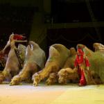 Премьера программы «100 лет под куполом цирка» состоится в Магнитогорске