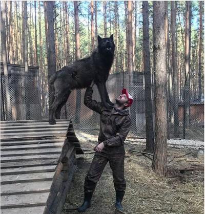 Приручивший волков бизнесмен стал звездой инстаграма