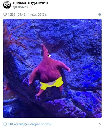 Ученые объяснили ставшие мемом ягодицы морской звезды