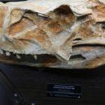 Выставка «Динозавры и их предки»