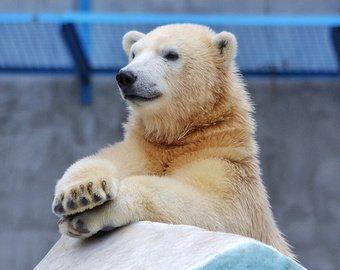 Женщина веником усмирила белого медведя