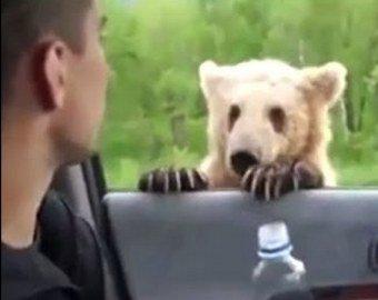 Житель Сахалина покормил с руки дикого медведя и остался невредим