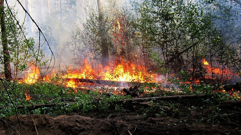 Более 280 лесных пожаров ликвидировали с апреля в Подмосковье