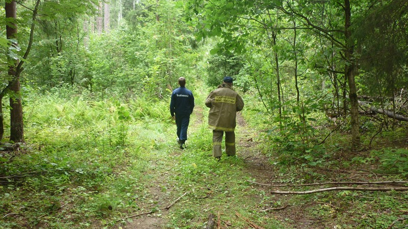 Более 800 заблудившихся вывели спасатели из лесов Подмосковья в 2019 году