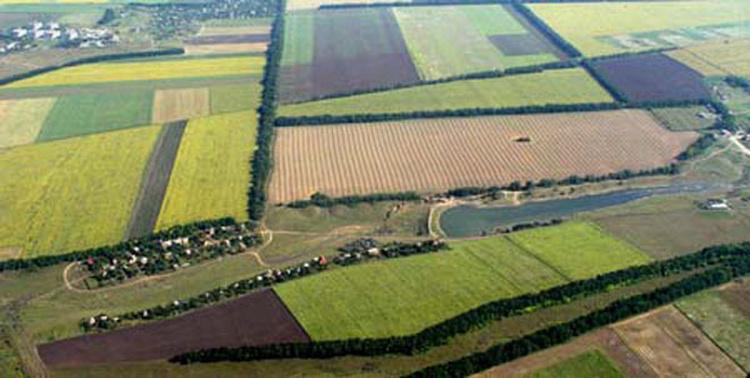 Десять муниципалитетов Подмосковья получат землю для многодетных семей