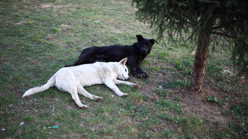 Карантин по бешенству животных отменили в поселке Люберец