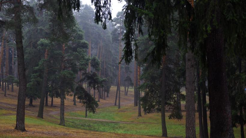 Лесоустройство в 14 лесничествах Подмосковья планируют закончить до конца года