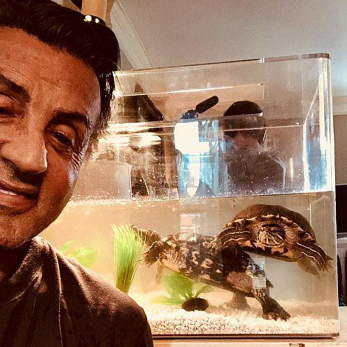В 1976 году Сильвестр Сталлоне купил двух черепах для сцены в фильме «Роки». После съемок он оставил их у себя. В 2018 году актер разместил у себя в Instagram фотографию тех самых черепах, которых зовут Куфф и Линк. Они прекрасно себя чувствуют и, учитывая средний срок жизни черепах, вполне могут пережить самого Сталлоне.